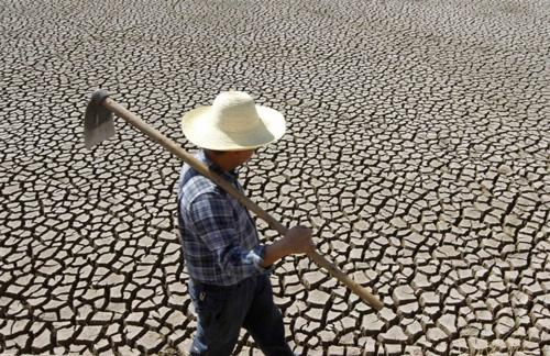 fao-farmer