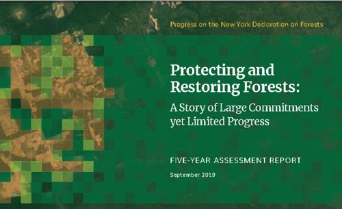 NY-Assessment-Reportex